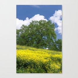 Almaden Meadows Canvas Print