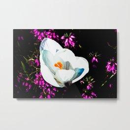 Crocus In Flower Bed Metal Print