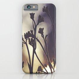 Kangaroo Paws at Sunset iPhone Case