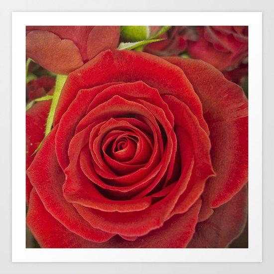 Red Rose for Love Art Print