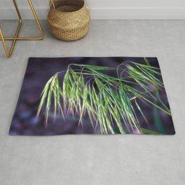 Hyper Exposed Hayseed On Purple Rug