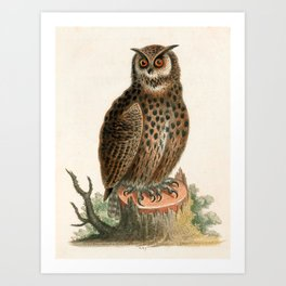 Great horned owl by George Edwards, 1758 (benefiting The Nature Conservancy) Art Print