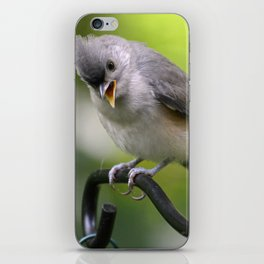 Teddy the Tufted Titmouse iPhone Skin