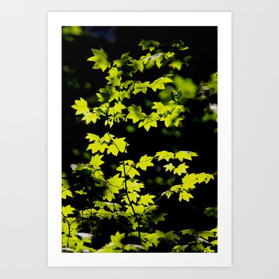 late summer sunny maple leaves Art Print
