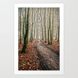 snowless winter walk in the forest Art Print