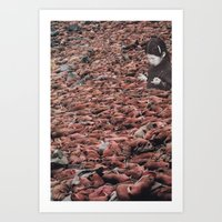 Counting Walrus Art Print