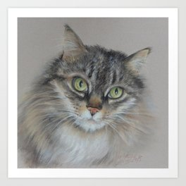Tabby cat Maine Coon portrait Pastel drawing on the grey background Art Print