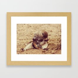 Baby Monkey Framed Art Print
