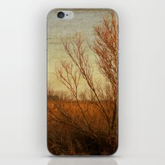 Orange winter iPhone & iPod Skin