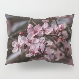 Spring Cherry Tree Blossoms - II Pillow Sham