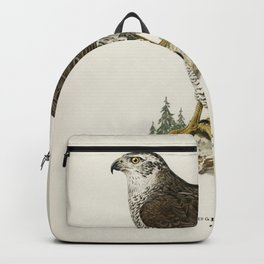 Goshawk female (Accipiter gentilis) illustrated by the von Wright brothers Backpack