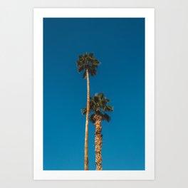 Palm Springs Palms Art Print