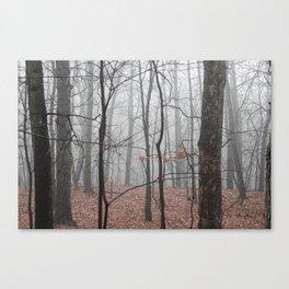 Woods on a Foggy Sunday Stroll Canvas Print