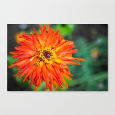 Macro Red Flower Canvas Print