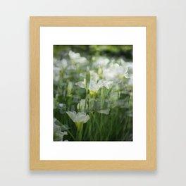 Mountain Jonquils Framed Art Print