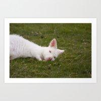Sleeping Wallaby Art Print