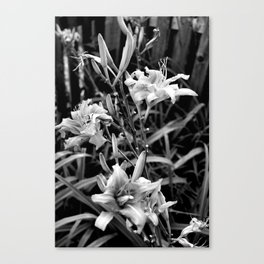Three's A Crowd Canvas Print