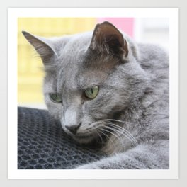 Gorgeous Grey Cat Photo Portrait Art Print