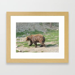 Grizzly Walkin Framed Art Print