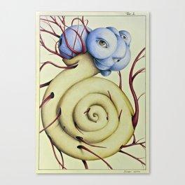 Wunderkammer Tav.2 Canvas Print