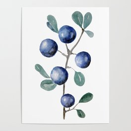 Blackthorn Blue Berries Poster