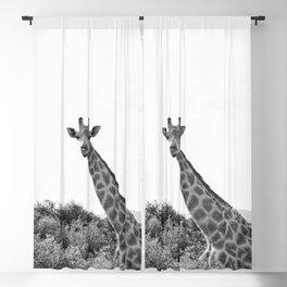 Observing Giraffe (Black & White) Blackout Curtain