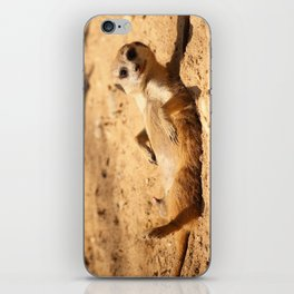 Meerkat Suricat suricatta Sunbathing #decor #society6 iPhone Skin