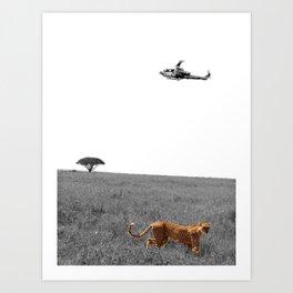 Cheetah's Prosper Art Print