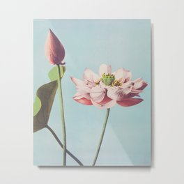 Ogawa Kazumasa - Lotus Flowers Metal Print