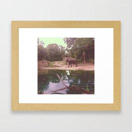 Elephant Sanctuary  Framed Art Print