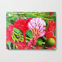 Poinciana Flower Metal Print