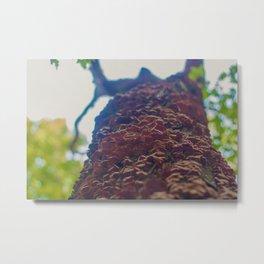 Mushrooms on a Tree Metal Print