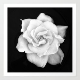 Gardenia Black and White Art Print