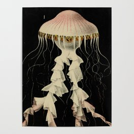 Vintage Illustration of a Jellyfish (1853) Poster