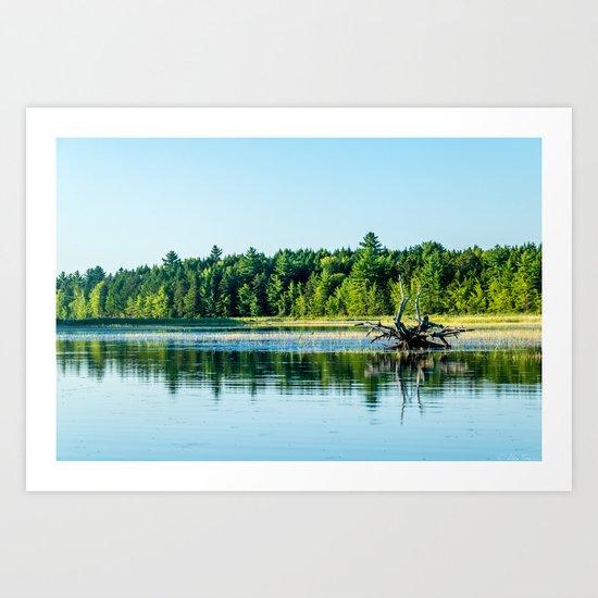 Driftwood Reflection Art Print