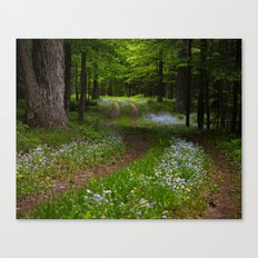 Forget-me-not Trail Canvas Print