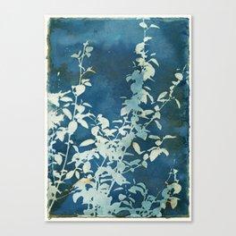 Evening Blooms Canvas Print