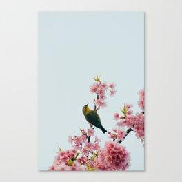 birds and sakura Canvas Print