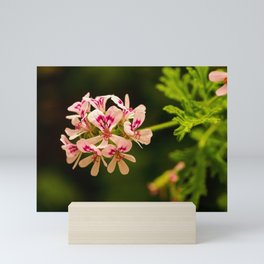 Rose Geranium Flower Mini Art Print