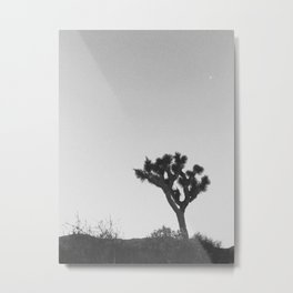 JOSHUA TREE XII Metal Print