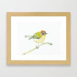 UriKuri Watercolour Goldcrest Framed Art Print