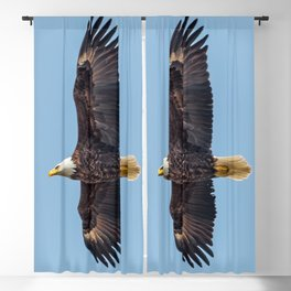 Soaring Bald Eagle in May Blackout Curtain