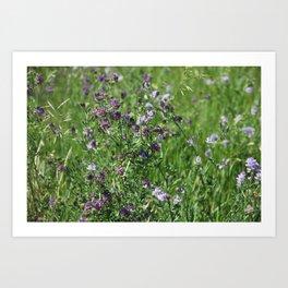 Purple Prairie Wildflowers Art Print