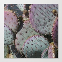 Cactus Whiskers Canvas Print