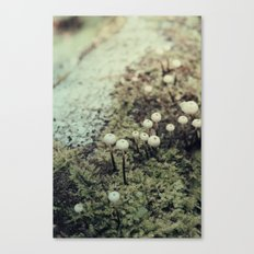 Toadstool Forest Canvas Print