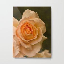 Dew Kissed Rose Floral Metal Print