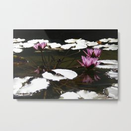 Lotus Pond  by Mandy Ramsey Metal Print