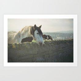 Horse in Whitby Art Print