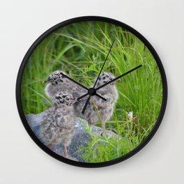 Triplets - Baby Seagulls Wall Clock