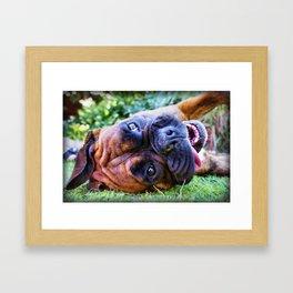 Bailey Boxer Framed Art Print
